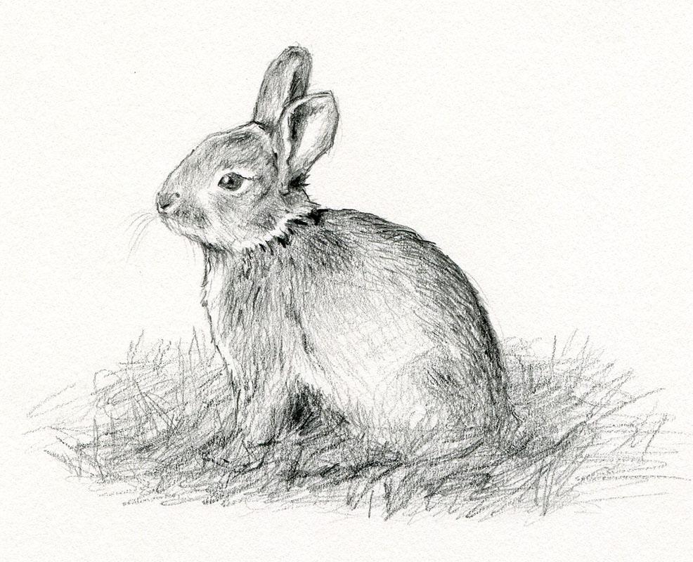 pin kaninchen zeichnung on pinterest. Black Bedroom Furniture Sets. Home Design Ideas
